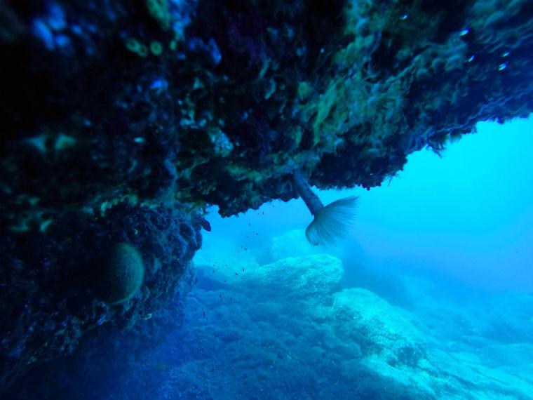 userfilesimagesSport202620loisirscalyspo20marinecalispo-marine-centre-de-plongee.jpg